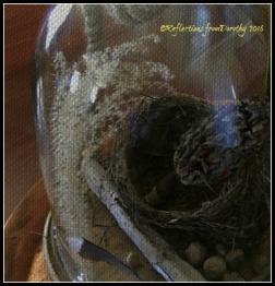 acorn-arrangement